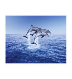 Dolfijnen Trio
