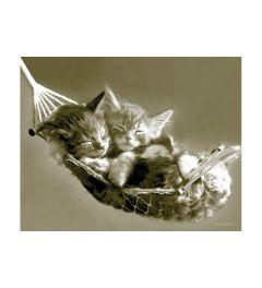 Katten in Hangmat - Keith Kimberlin