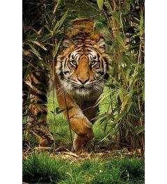 Tiger - Bambus