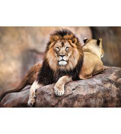 Löwe - King of the pride