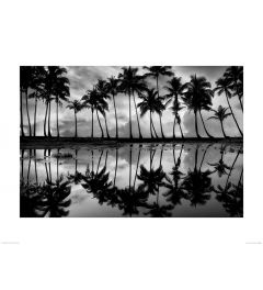 Palmen in Schwarz und Weiß Art Print Dennis Frates 60x80cm