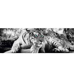 Tiger - Grüne Ogen