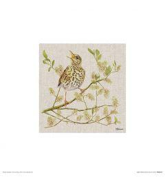 Drosseln Art Print Jane Bannon 30x30cm