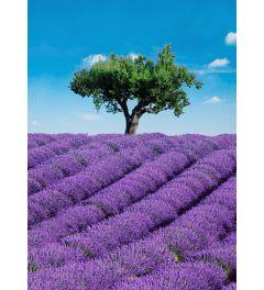 Provence 4-delig Fotobehang 183x254cm