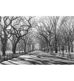 Poets Walk New York Fotobehang 175x115