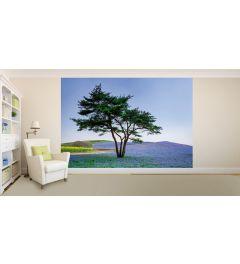 Baum Und Blaue Blumen In Japan Fototapete 4-teilig 368x254cm
