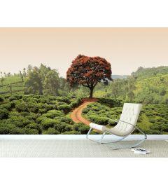 Roter Baum Und Hügel in Sri Lanka Fototapete 4-teilig 368x254cm
