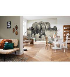 Elefant 4-teilige Vlies Fototapete 368x248cm